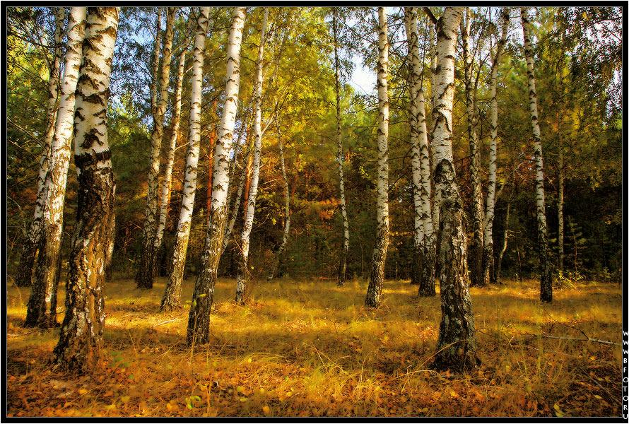 Фото осеннего леса красивые