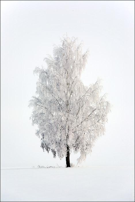 Береза зимой картинки для детей