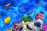 Морское дно с кораллами и рыбками
