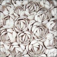 Белоснежные ракушки