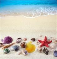 Морской песчаный берег и ракушки
