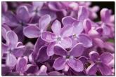 Цветы после майского дождя