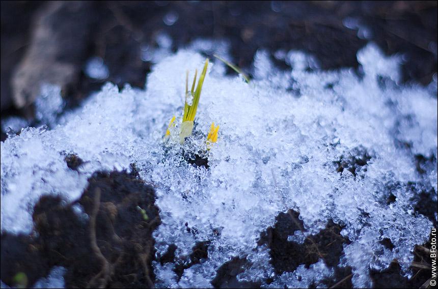 плинтуса это фото снег на зеленый росток съемки освещение