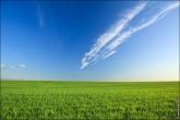 Летний пейзаж с зеленой травой и голубым небом