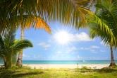 Фотобои на стену пальмы и море