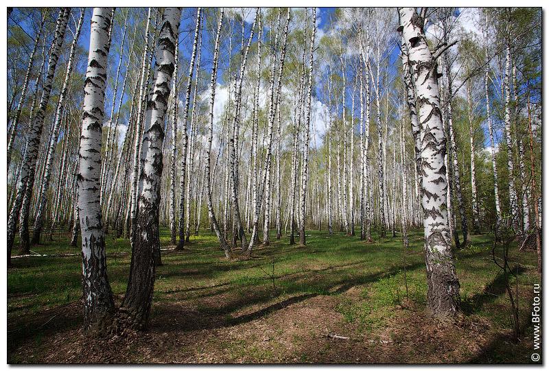 Картинки по запросу весенний лес