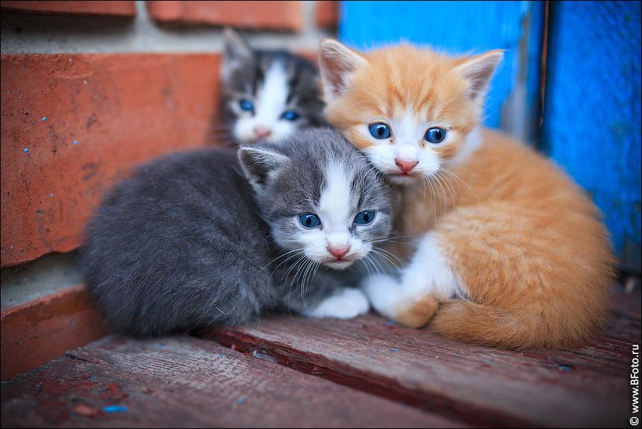 Поздравление днем, видео про котят картинки