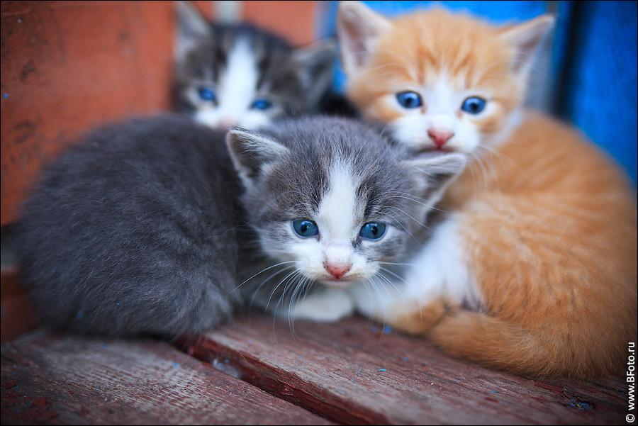 пломба посмотреть картинки всех котят компактные стеллажи