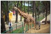 Сафари парк в Ельче
